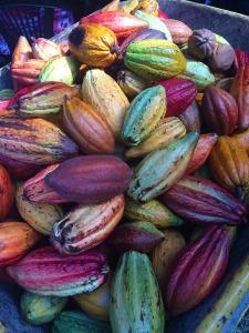 cocoa-pods-1424219_1280